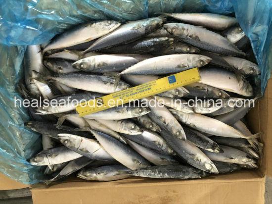80-100PCS New Arrival Whole Round Frozen Pacific Mackerel Fish