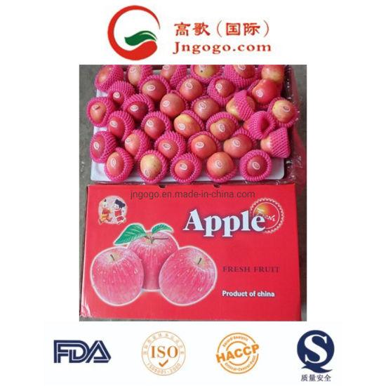 Fresh Bright Red Gala Apple