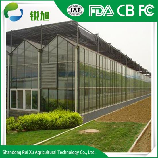 Hot-Selling Hydroponic System Polycarbonate Greenhouse for Growing Vegetables and Fruits pictures & photos