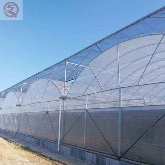 Agriculture Productive Plastic Film Tomato/Garden Greenhouse with Hydroponics Growing System