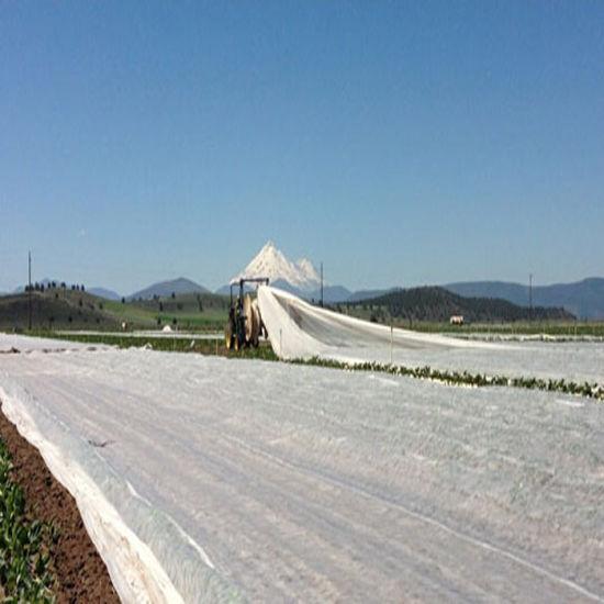 UV Stabilised PP Spunbond Agriculture Fabrics