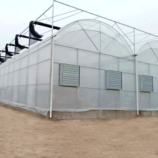 Agricultural/Commercial/Farm/Garden Single Span Poly Film/Po/PE Film Covered Greenhouse for Vegetable Tomatoes/Cucumber/Peppers/Strawberry