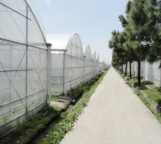 Multi-Span Plastic Film Greenhouse for Vegetable with Hydroponic System Coolingpad