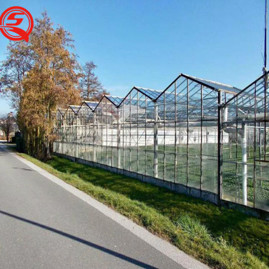 with Hydroponic Cultivation System Glass Greenhouse for Vegetable Planting