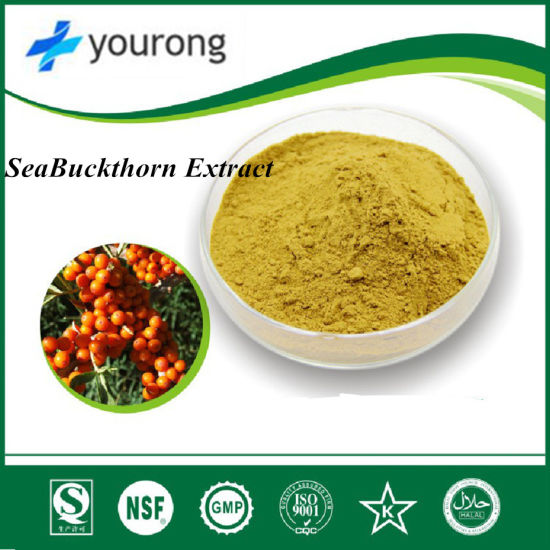 ISO Certificated Sea Buckthorn Extract Powder, Sandthorn Instant Powder