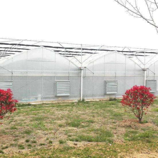 Geoponics Film Greenhouse with Fertigation Microgreen Growing System Invernaderos