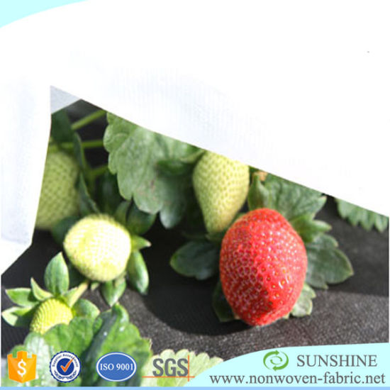 1%~3%UV PP Nonwoven Fabric for Agricalture Cover Made in China pictures & photos