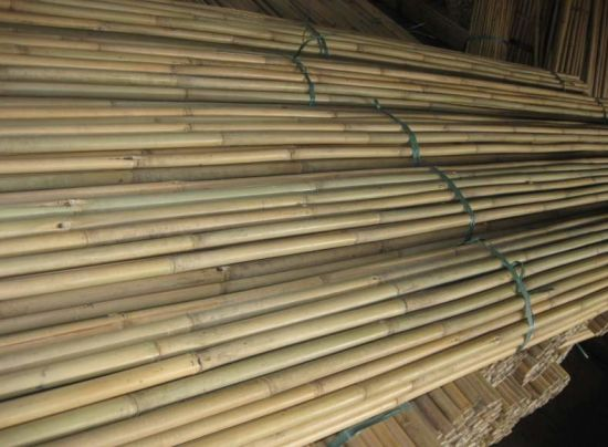 China Large Dry Raw Moso Bamboo Poles for Sale - China