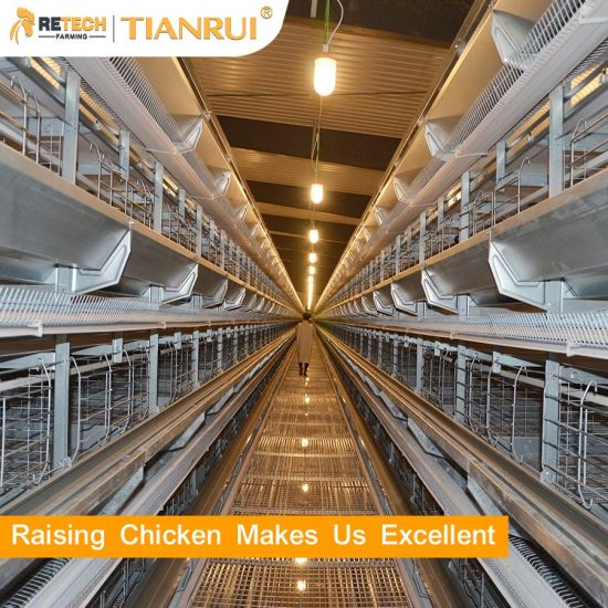 Automatic Poultry Farm Equipment Battery Egg Layer Chicken Cage for Laying Hens