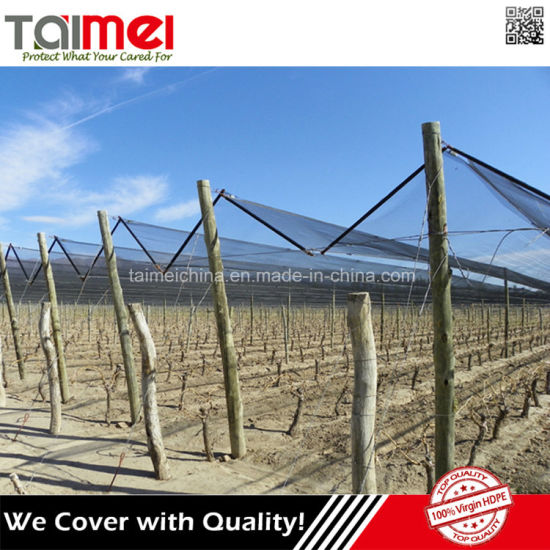 Virgin HDPE Anti Hail Net/Hail Protection Netting pictures & photos
