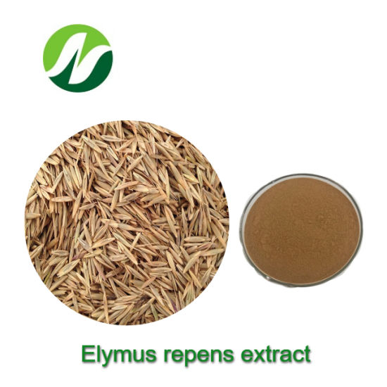 Cheap Hot Sale Top Quality 4: 1~20: 1 Elymus Repens Extract