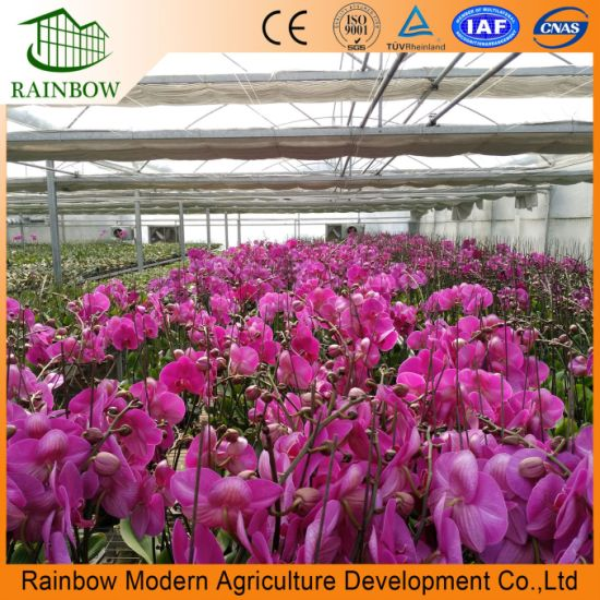 Agricultural Machinery/ Multi Span Poly Film Tunnel Greenhouse for Tomato Pepper Lettuce Strawberry Vegetables Flowers