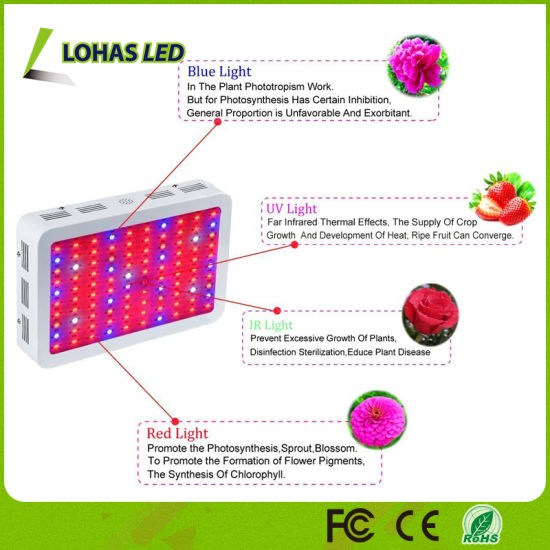 300W-1200W Full Spectrum LED Grow Light for Indoor Greenhouse Planting Flowers/Seeds/Vegetables pictures & photos
