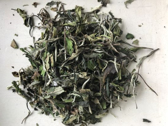 White Peony Tea Leaf 6900 with EU and Us Regulation