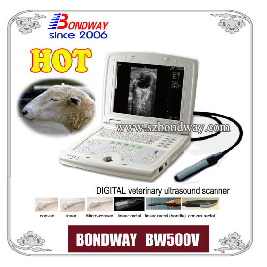 Digital Laptop Veterinary Ultrasound Scanner --Equine, Bovine, Swine, and Small Animal Scanning pictures & photos