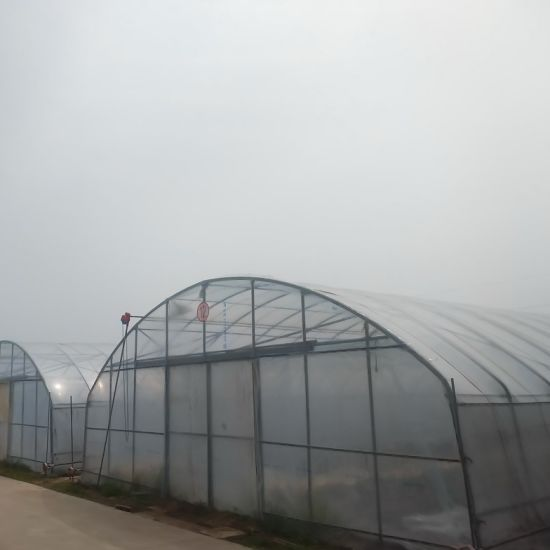 Agriculture Film Green House for Planting Cucumber