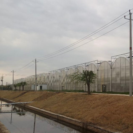 Agriculture Multi Span Film Greenhouses for Hydroponics Planting