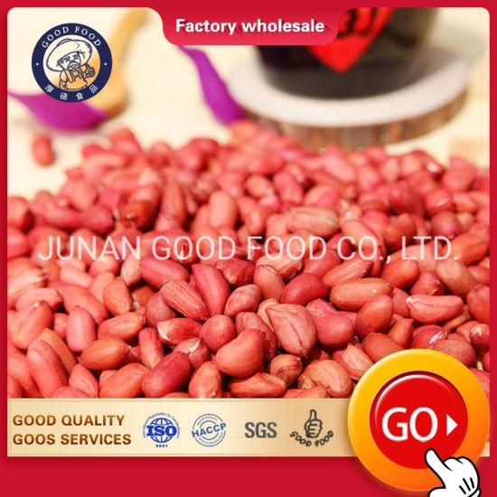 New Crop Raw Peanuts / Java Peanuts / Bold Peanut for Sale