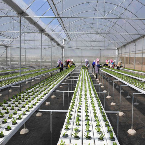 Growing Vegetables on a Large Scale in a Smart Greenhouse Hydroponic System