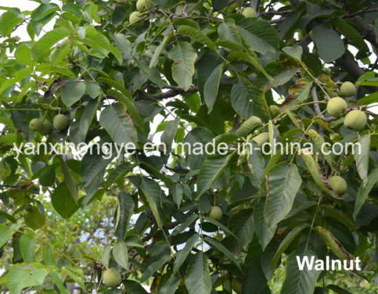 Export High-Quality 100% Natural Healthy Food Rich Nutrition Walnut pictures & photos