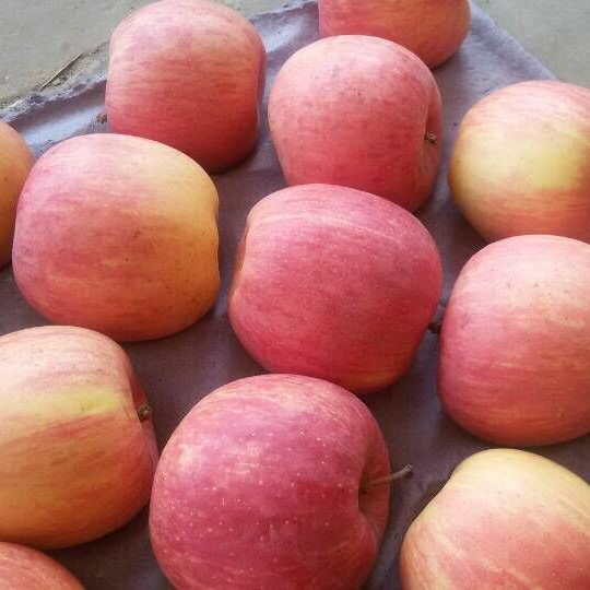 Golden Supplier of Chinese Fresh Red FUJI Apple (counts 100-125) pictures & photos