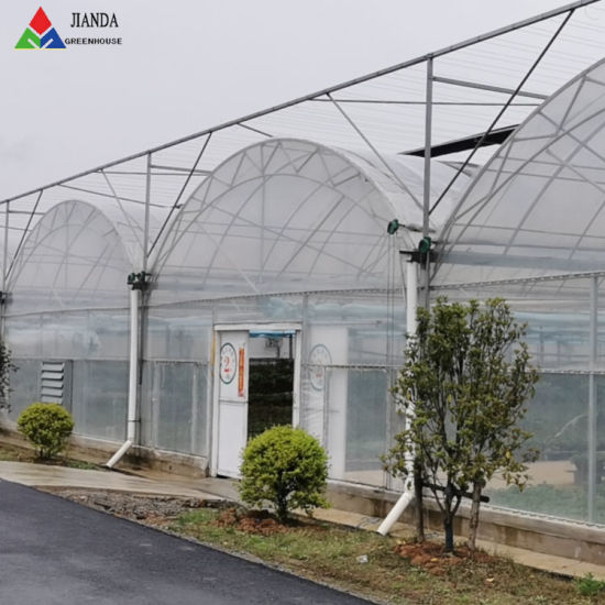 China Flat Roof Po Plastic Film Greenhouse China Green House Commercial Greenhouse