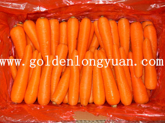 High Quality Fresh New Crop Carrot pictures & photos