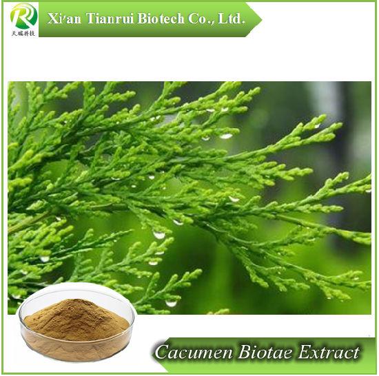 Cacumen Biotae Extract/ Chinese Arborvitae Twig Powder
