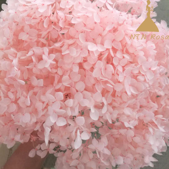 Wholesale Preserved Flowers Christmas Decoration pictures & photos