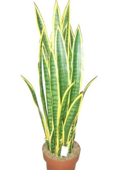 Good Quality Artificial Plants and Flowers of Sanseveria Jf846 pictures & photos