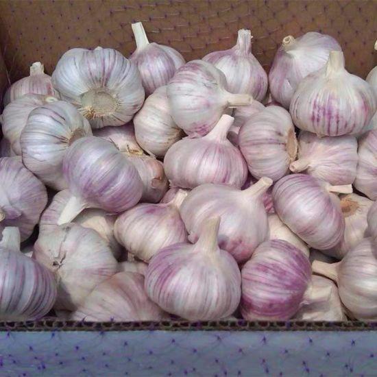 2018 New Crop Fresh Garlic with Mesh Bag Packing