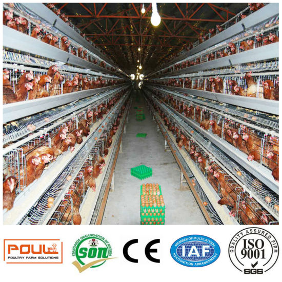 Automatic Poultry Equipment Batter Chicken Cage for Layer Farms pictures & photos