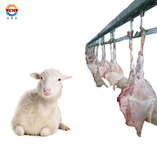 Slaughterhouse Halal Goat Slaughter Line Abattoir Sheep Machine with Chilling Cold Room Equipment