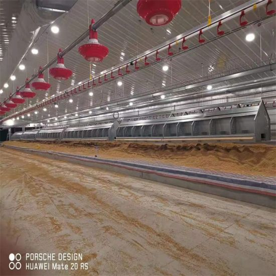 Complete Set Broiler Chicken Feed and Drink Equipment System