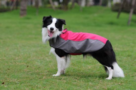 Pet Sports Dog Clothes Jacket (Waterproof) with Reflective Stripes
