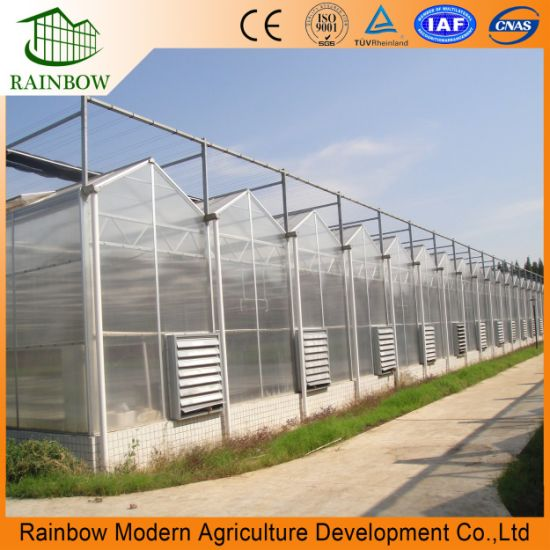 Venlo Type PC Sheet Polycarbonate Board Agricultural Greenhouse for Vegetables/ Flowers/ Fruits/Tomato/ Mushroom/ Hydroponics Growing System