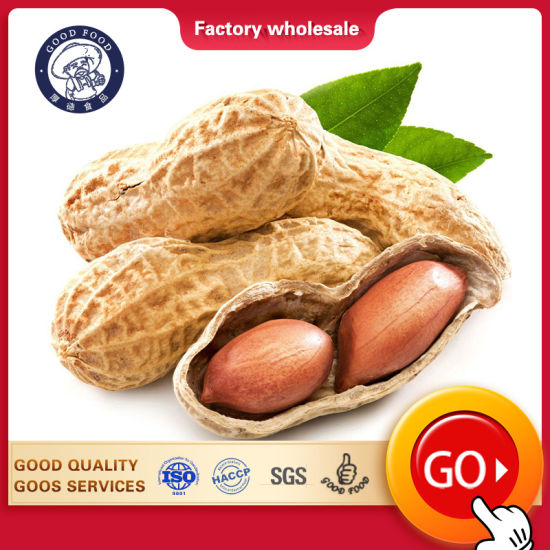 Red Peanut, Blanched Peanut Kernels, Bold Peanuts Blanched Red Peanuts Raw Peanuts Kernel / Raw Peanut in Shell