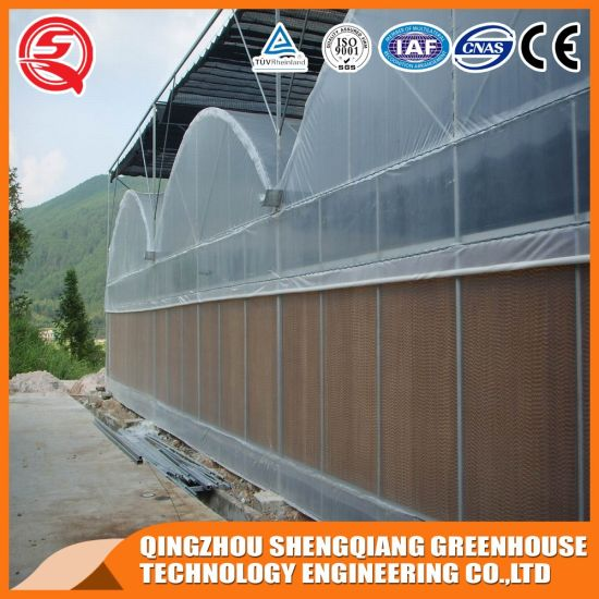 Supplier Multi-Span Plastic Film Agricultural Greenhouse