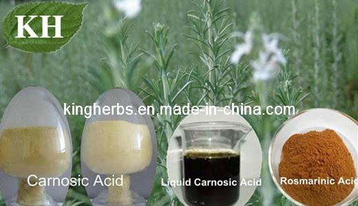 China Natural Preservatives Rosemary Extract Rosemarinic