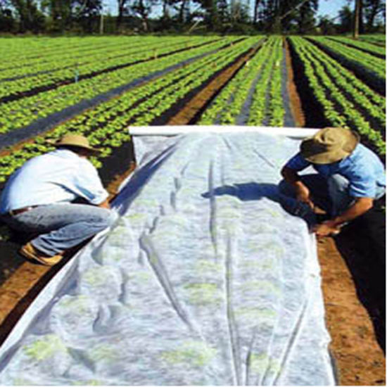 Non-Woven Fabric for Plant Cover with UV Protection pictures & photos