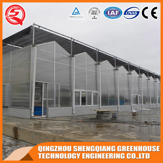 China Commercial PC Plant Garden Greenhouse Hydroponic for Strawberry/Melon/Pepper/Lettuce