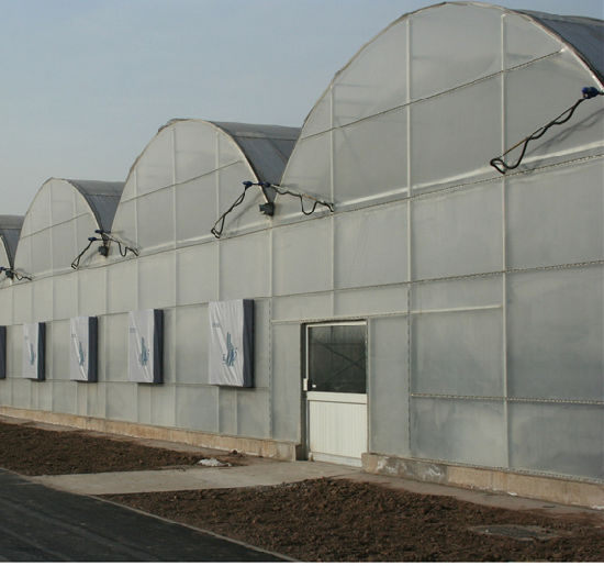 Agriculture Multi Span Plastic Greenhouse for Planting