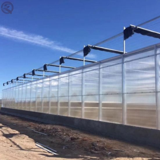 Agricultural Single Span Po/PE Film Covered Greenhouse for Vegetables Tomatoes/Cucumber/Peppers/Strawberry