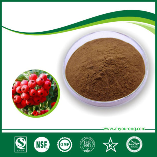 ISO Certificated Manufacture Supply Vacuum Packaged Hawthorn Extract Crataegus Pinnatifida Bunge Powder