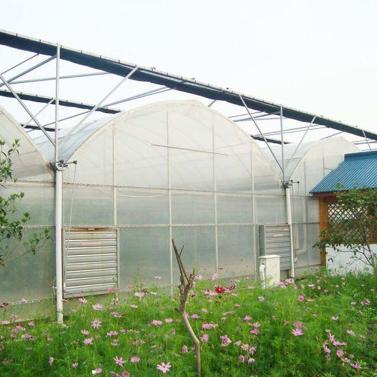 Factory Price Multi-Span Plastic Film Agricultural Economical Greenhouse