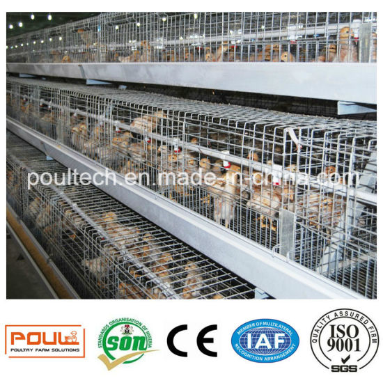 Automatic Galvanized Pullet Cages for Chicks pictures & photos