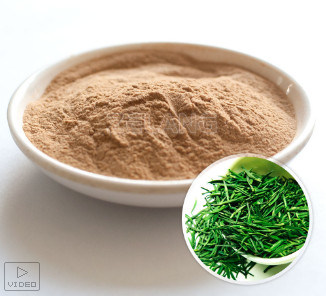 ISO22000 Kosher Certified Manufacturer Green Tea Concentrate Extract