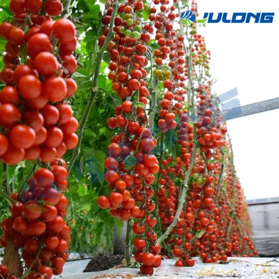 High Quality 200 Micron Po Film Covered Tunnel Multi Span Greenhouse with Hydroponics System for Strawberry Tomato Flowers Fruits Farm