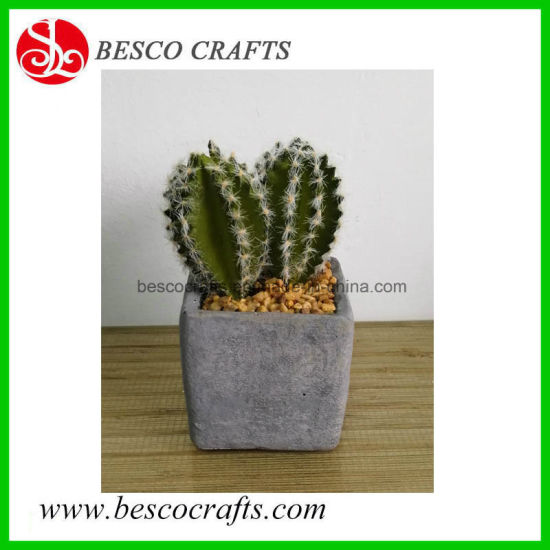 Hot Selling England USA Japan Promotion Artificial Various Colors Cactus pictures & photos