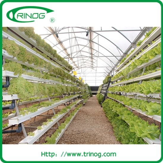 China 6 Layer A Frame Hydroponics Equipment For Sale China